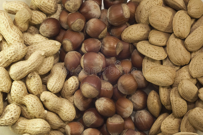 Nuts in rows royalty free stock photography