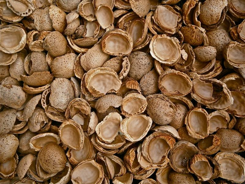 Nuts & Seeds, Clam, Nut, Commodity stock images