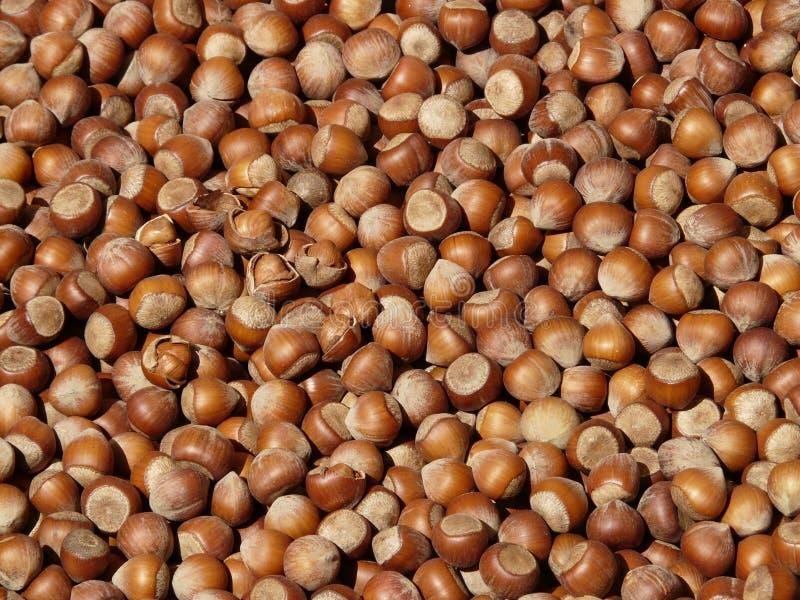 Nuts & Seeds, Hazelnut, Nut, Food royalty free stock photo