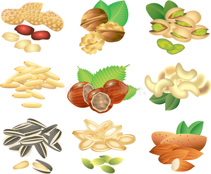 Nuts and seeds photo-realistic set. Nuts and seeds photo-realistic detailed set stock illustration