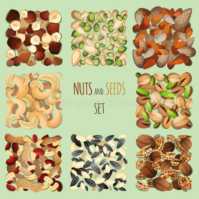 Nuts and seeds set. Nuts and seeds mix decorative elements set vector illustration vector illustration
