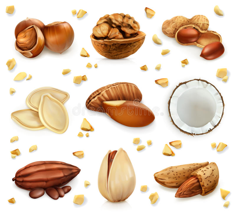Nuts in the shell, vector icon set royalty free illustration