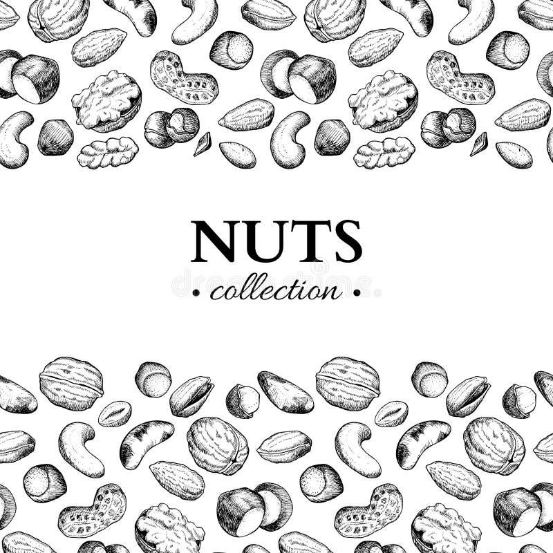 Nuts vector vintage frame illustration. Hand drawn engraved food objects. royalty free illustration