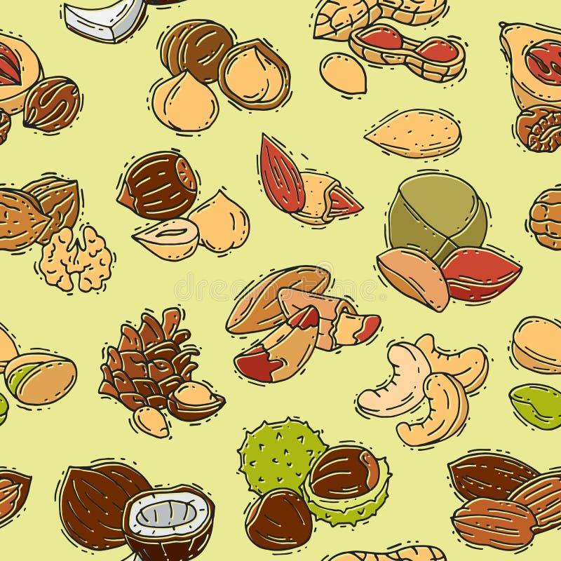 Nuts Vektornussschale von gesetzter Acajoubaumerdnuß und -kastanie der Haselnussmandel- und -walnussnahrungsillustration mit Musk lizenzfreie abbildung