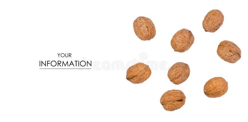Nuts Walnussmuster lizenzfreie stockfotografie
