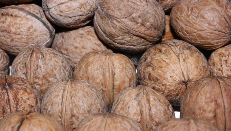 nutshellvalnötter arkivbild