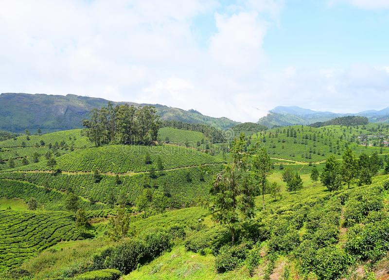 Nutteloos Heuvels, Groen, en Theetuinen in Natuurlijk Landschap in Munnar, Idukki, Kerala, India stock foto's