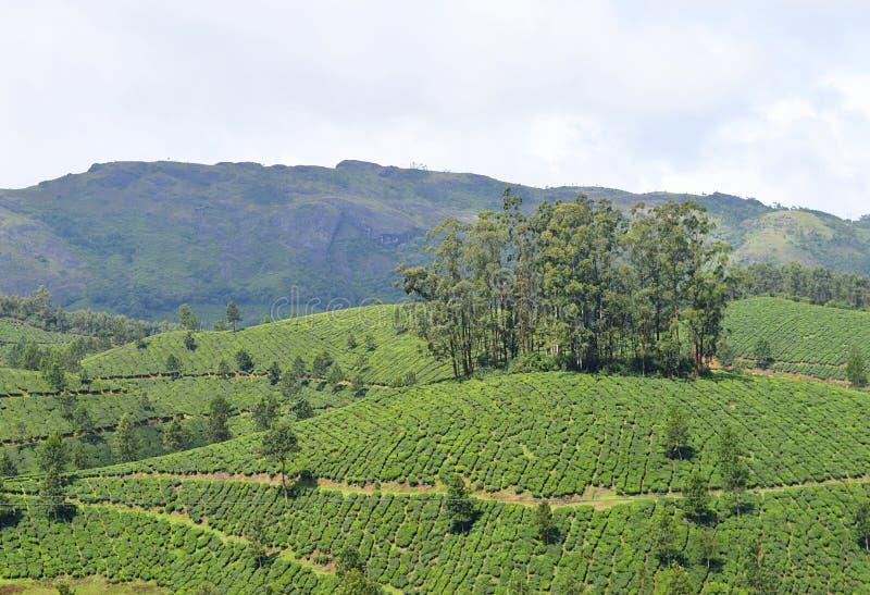 Nutteloos Heuvels, Theetuinen, en Groen in Munnar, Idukki, Kerala, India stock foto's