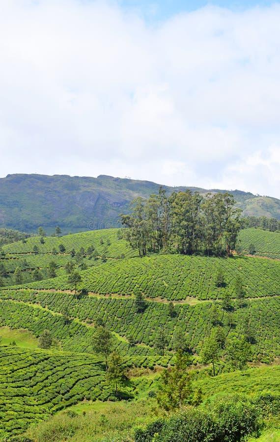 Nutteloos Heuvels, Theetuinen, en Hemel in Munnar, Idukki, Kerala, India royalty-vrije stock foto