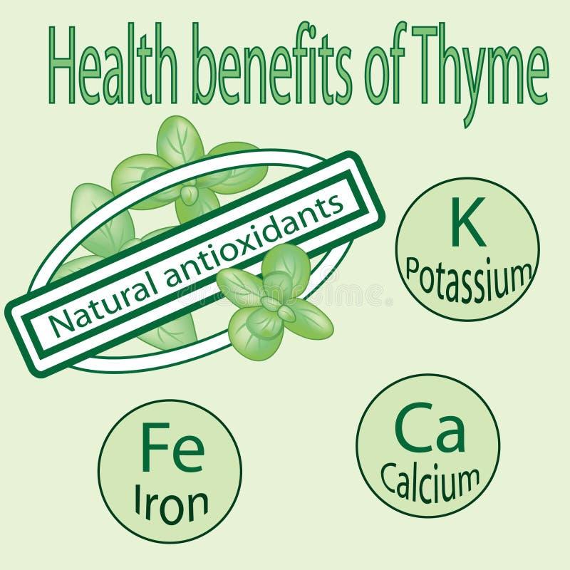 Nutzen für die Gesundheit des Thymians und seiner Mittel lizenzfreie abbildung