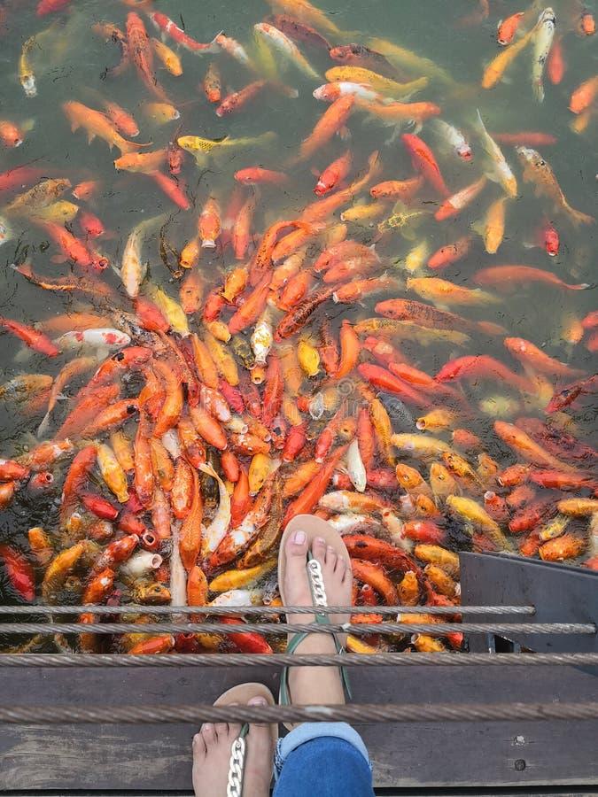 Nuvali Филиппины стоковое изображение rf