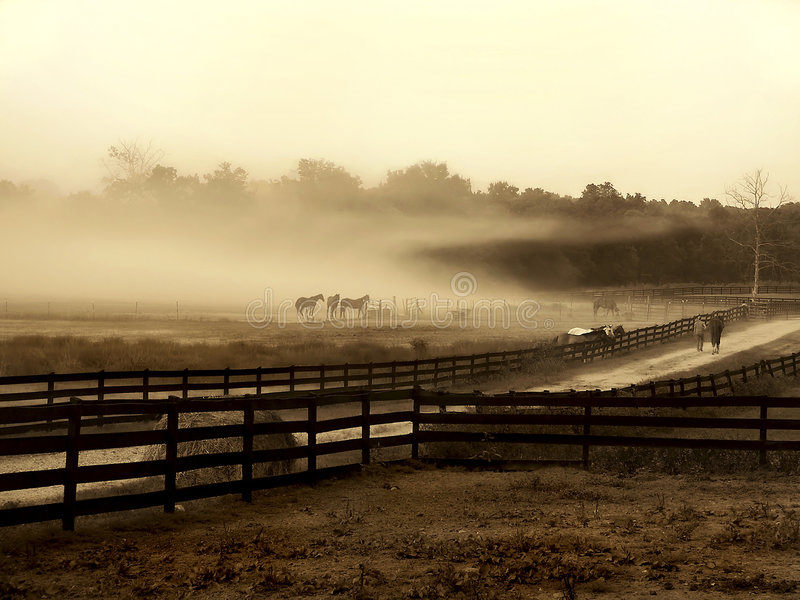 Nuvem da névoa na exploração agrícola do cavalo imagem de stock royalty free