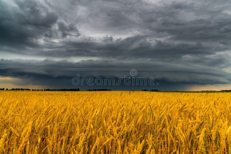 Nuvem de tempestade redonda sobre um campo de trigo Rússia fotografia de stock