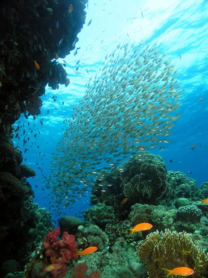 Nuvem dos peixes de vidro imagem de stock