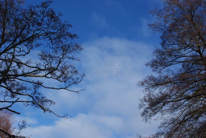 Nuvem e árvores no céu azul imagem de stock royalty free