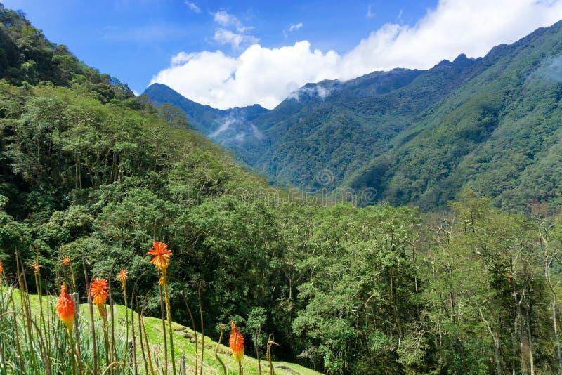 Nuvem Forest Landscape imagem de stock royalty free