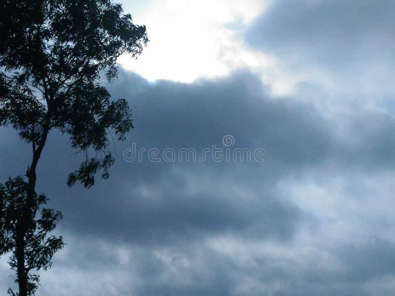Nuvens, a árvore, céu da luminosidade reduzida foto de stock