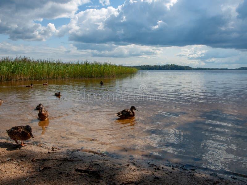 Nuvens bonitas sobre o lago no dia ensolarado do verão com reflexões fotografia de stock