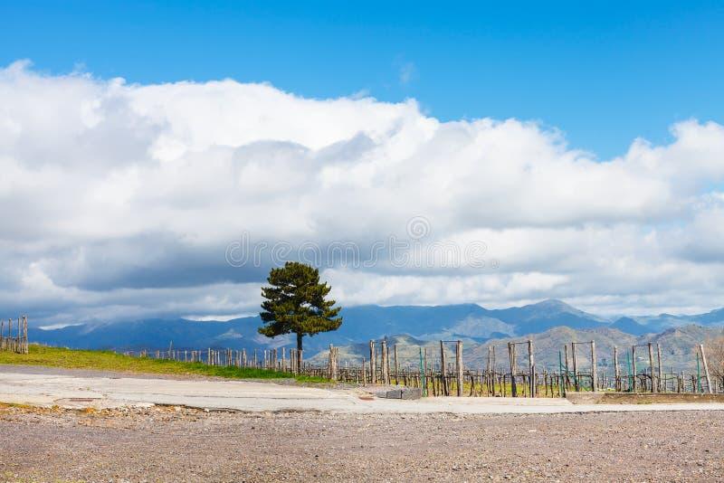 Nuvens brancas sobre o vinhedo na região de Etna fotos de stock