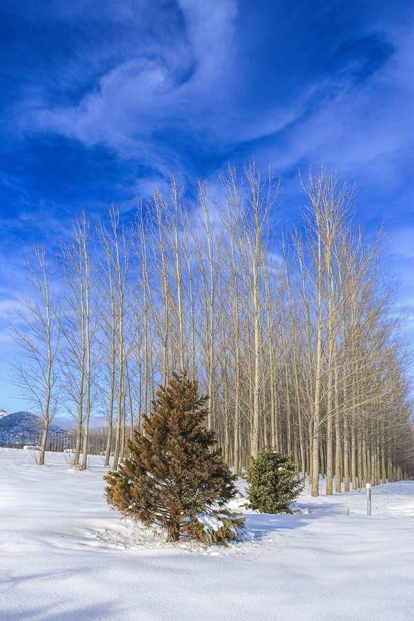 Nuvens claras em um dia de inverno brilhante fotos de stock royalty free