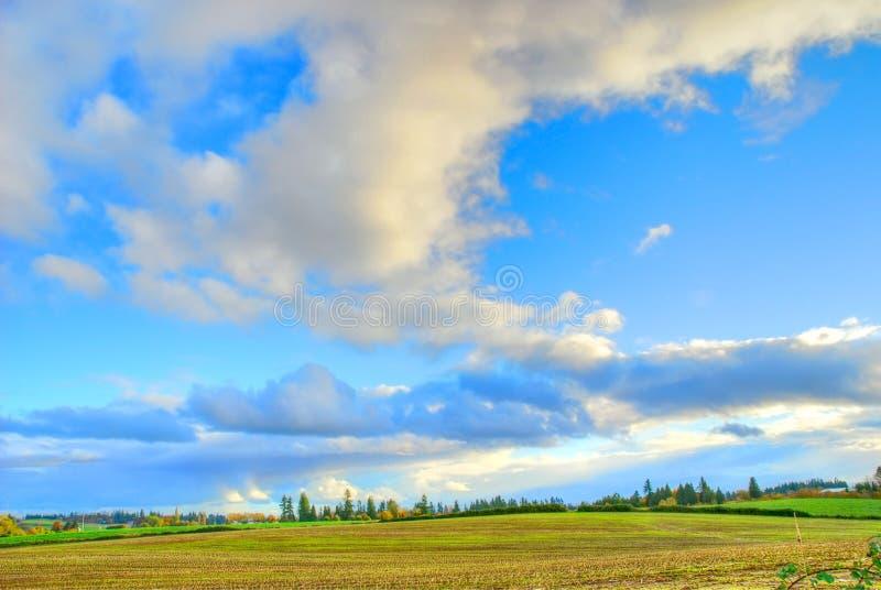 Nuvens do campo de milho fotografia de stock royalty free