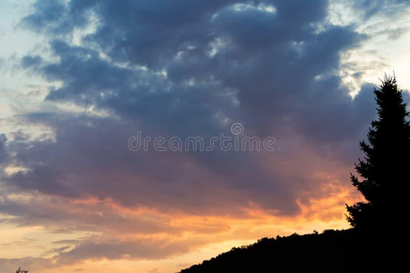Nuvens do por do sol com a silhueta de um pinheiro imagens de stock royalty free