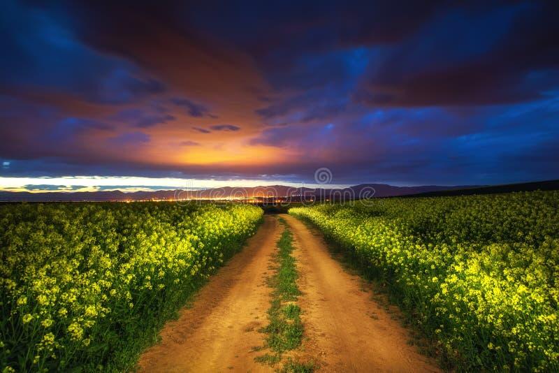Nuvens dramáticas sobre o campo da colza, noite bonita da mola imagens de stock royalty free