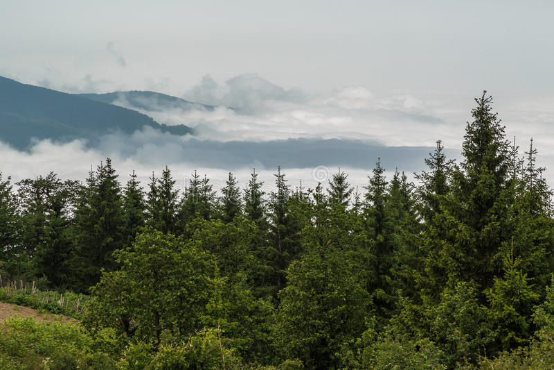 Nuvens e a floresta dos pinhos fotos de stock