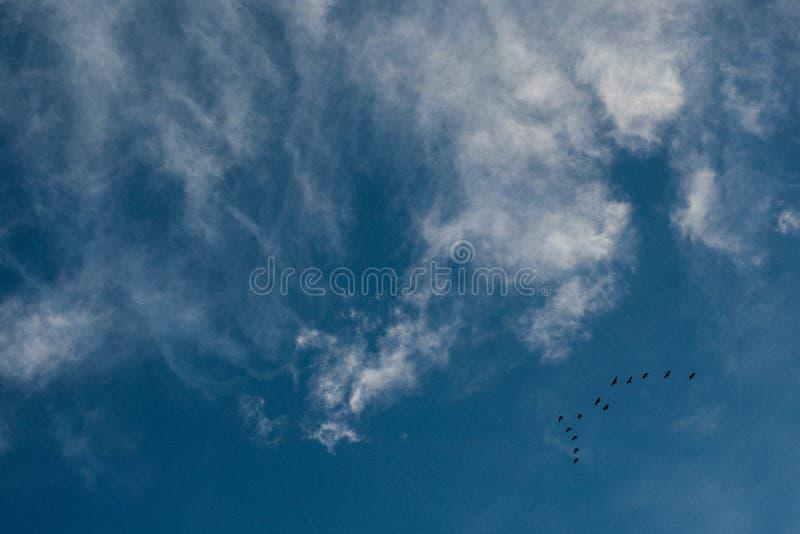 Nuvens e um céu azul com um grupo de pássaros de voo fotos de stock