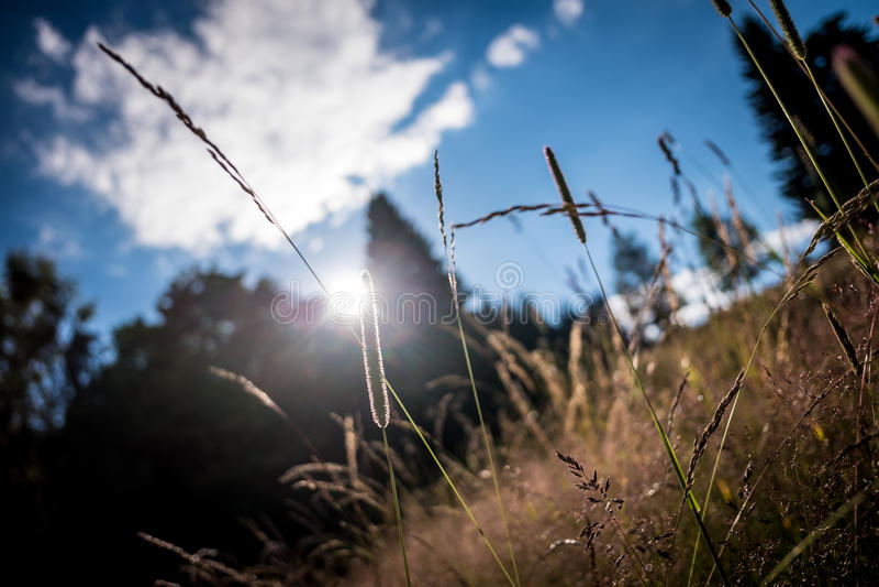 Nuvens exteriores do céu da grama e do sol imagens de stock royalty free