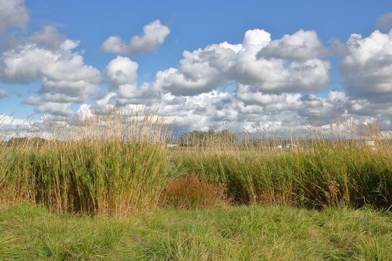 Nuvens gramíneas do campo e de cúmulo imagens de stock
