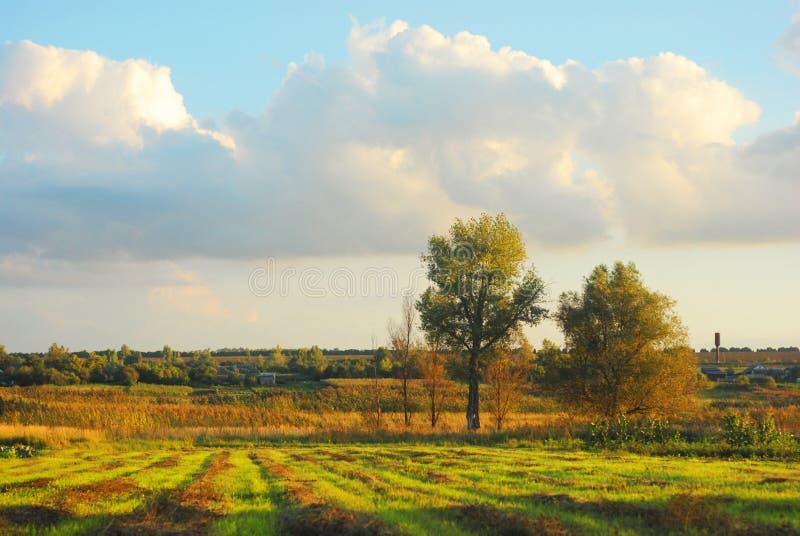 Nuvens no céu ensolarado da noite sobre o prado com feno chanfrado nas linhas, nos álamos e no campo imagens de stock royalty free