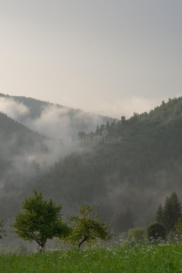 Nuvens que rolam sobre a floresta fotos de stock royalty free