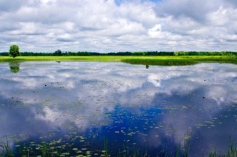 Nuvens refletindo, lírios de água imagens de stock
