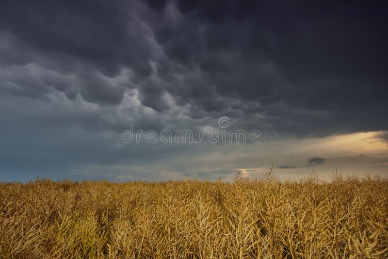 Nuvola di Mammatus dopo la tempesta nell'ora legale fotografia stock libera da diritti