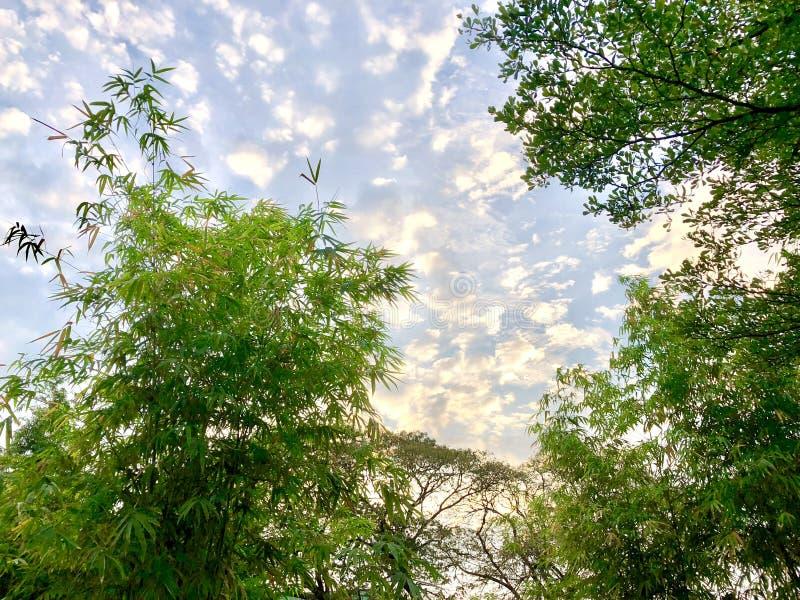 Nuvola dorata sul cielo con la foglia di bambù immagini stock libere da diritti