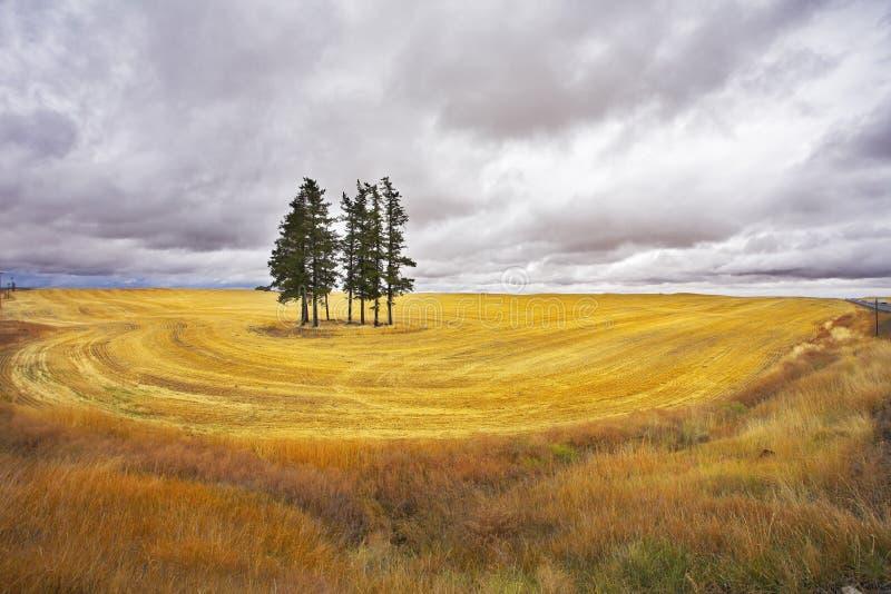 Nuvola temporalesca enorme sopra un campo giallo immagine stock libera da diritti