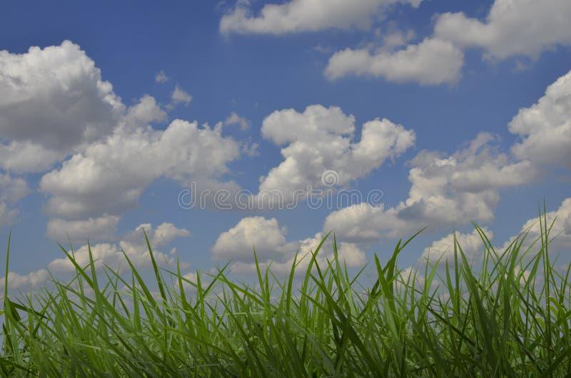 Nuvole bianche in cielo blu sopra il campo di erba verde immagini stock libere da diritti