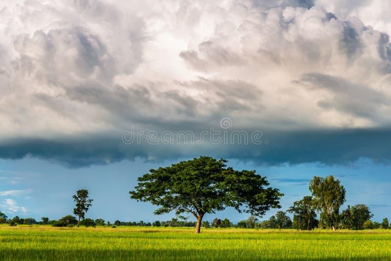 Nuvole di pioggia basse al campo fotografie stock