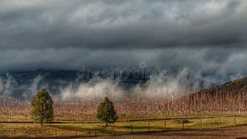 Nuvole di tempesta basse sopra un frutteto di mattina immagine stock libera da diritti