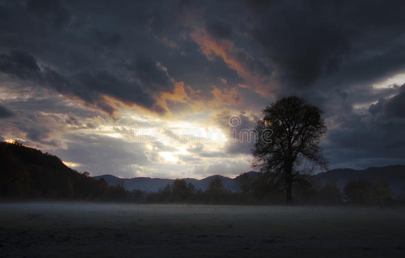 Nuvole di tempesta pesanti al tramonto con l'albero sul prato fotografia stock