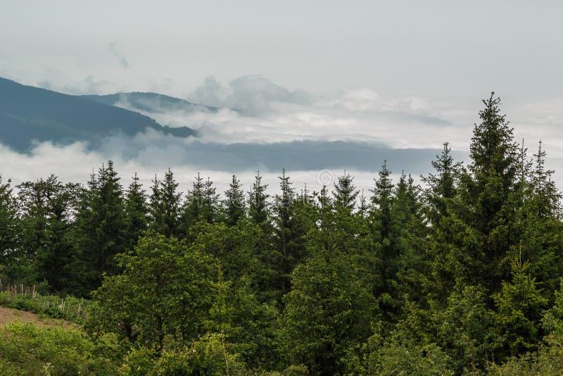 Nuvole e la foresta dei pini fotografie stock