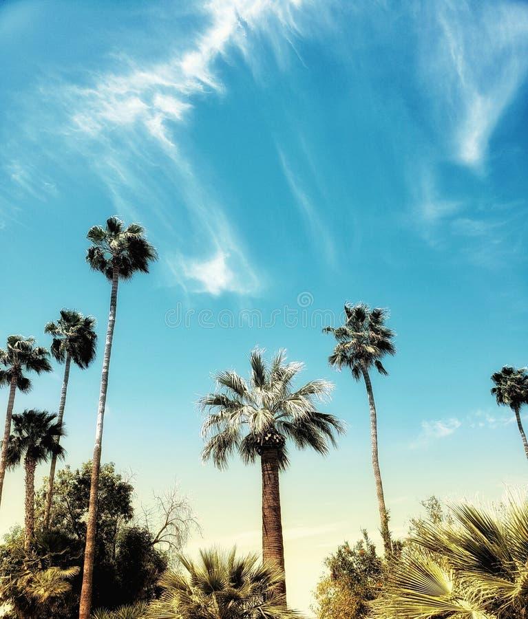 Nuvole e palme fotografie stock libere da diritti