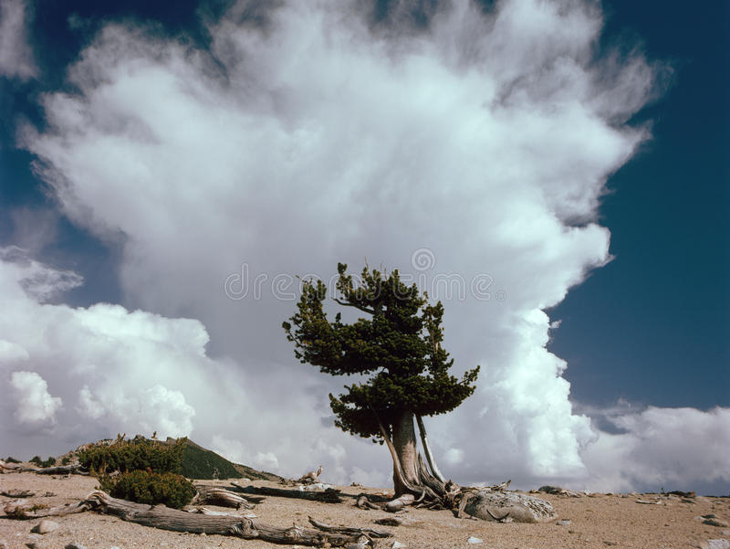 Nuvole sopra la cresta del mammut, John Muir Wilderness, sierra Nevada Range immagini stock libere da diritti