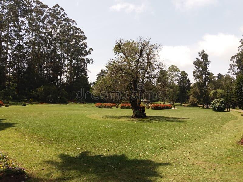 Nuwara eliya的镇静庭院 免版税库存图片