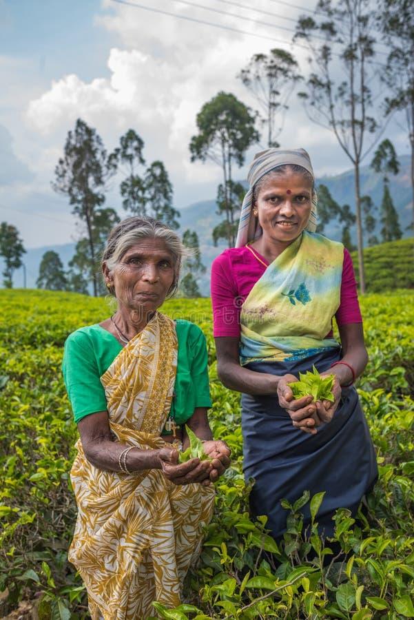 NUWARA ELIYA, ШРИ-ЛАНКА - 9-ое февраля 2016: Подборщики чая стоковые изображения
