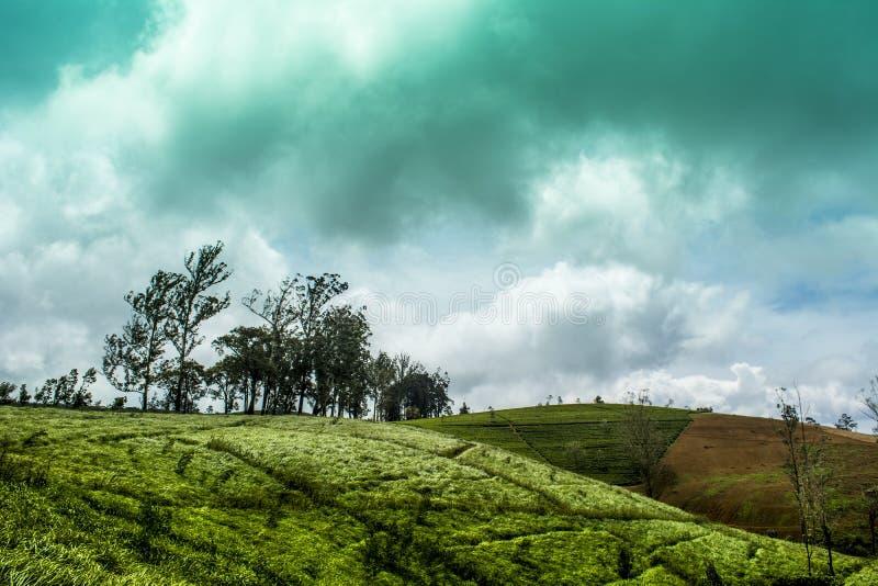 Nuwara Eliya Sri Lanka fotografia royalty free