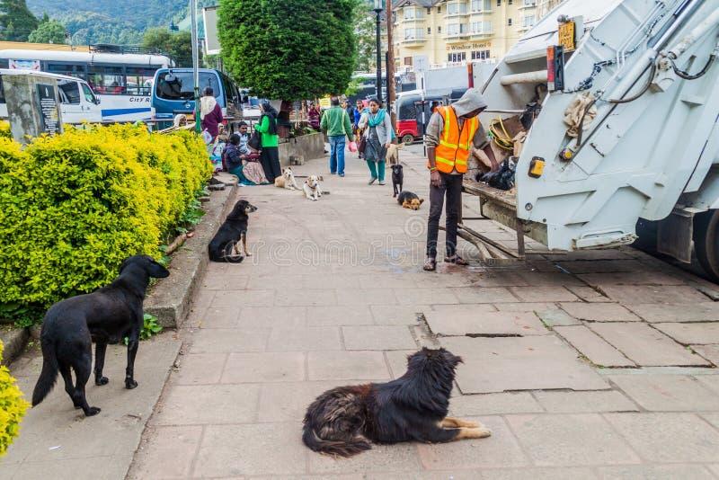 NUWARA ELIYA, SRI LANKA - JULI 16, 2016: Verdwaalde het afvalcollectoren van het hondenhorloge in het slepen van Nuwara Eliya stock foto's