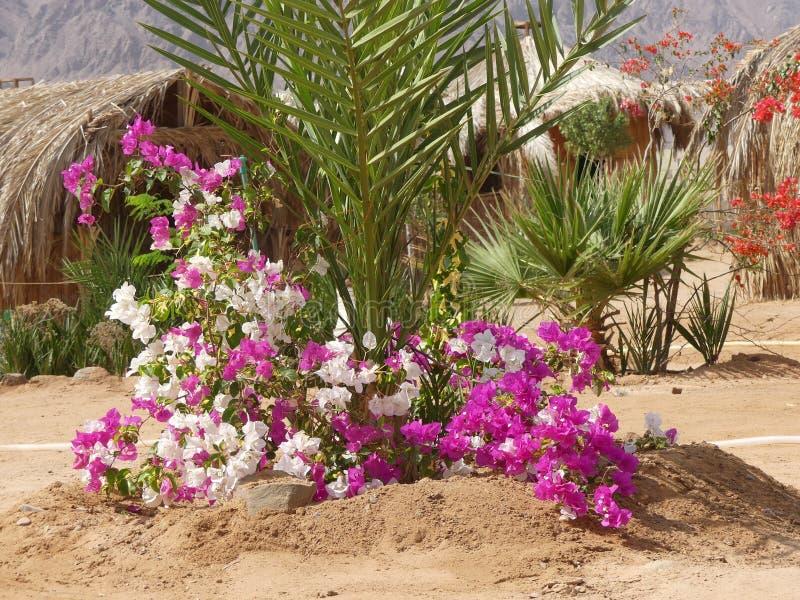 Nuweiba, Sinai stock photo