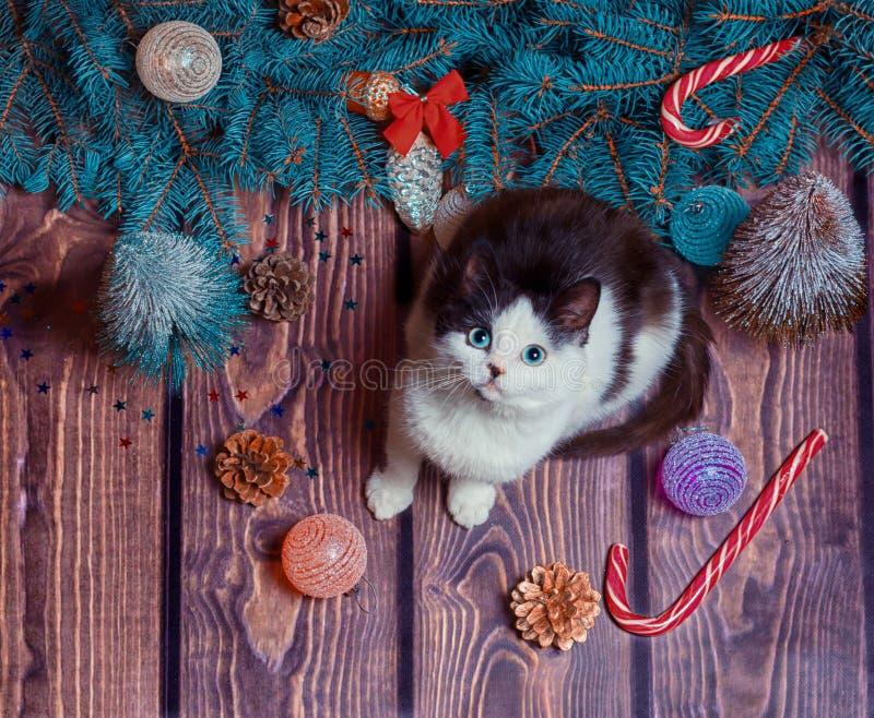 Nyår, platt, grå och vit kattunge på ett golv av trä med juldekorationer och blå fiberförgreningar royaltyfri fotografi